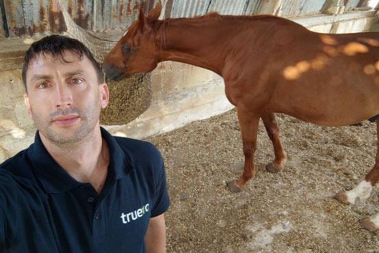 RMJs Horse Rescue